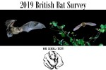British Bat Survey in July/Aug